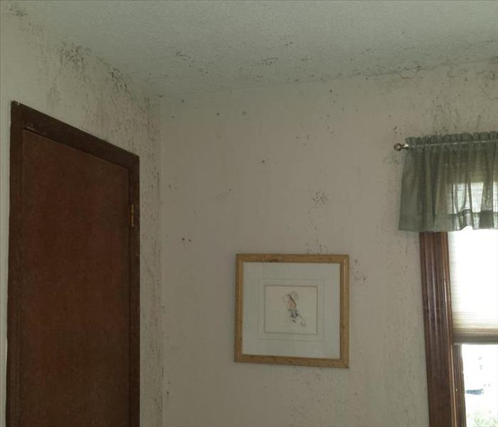 Mold Remediation Does Your Beech Grove Home Have a Mold Problem?