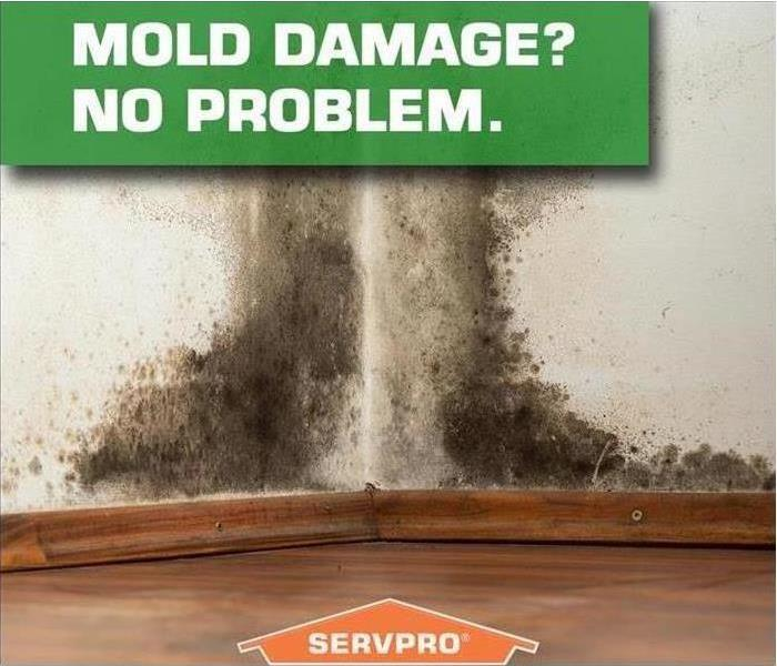 Mold Remediation Conditions in Greenwood Might Be Right For Mold