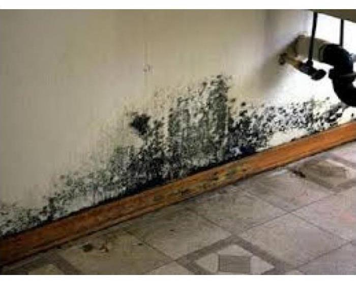 Mold Remediation Secondary Damage Can Occur After Water Damage in Your Johnson County Home or Business