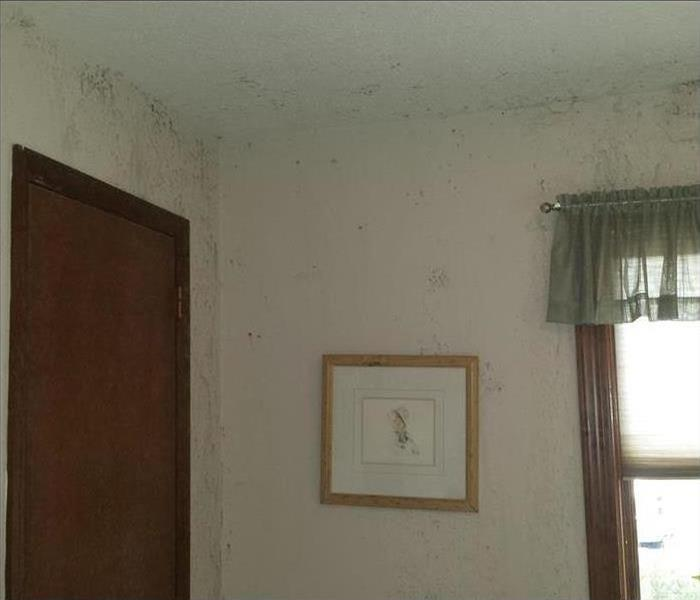 Mold Remediation Whiteland & Franklin Residents:  Follow These Mold Safety Tips if You Suspect Mold